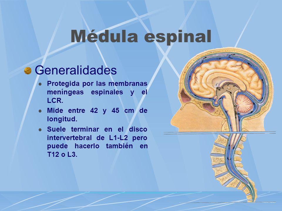Médula espinal Generalidades