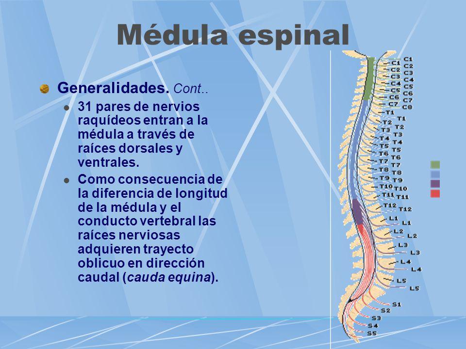 Médula espinal Generalidades. Cont..