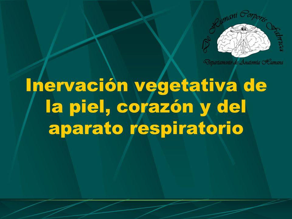 Inervación vegetativa de la piel, corazón y del aparato respiratorio