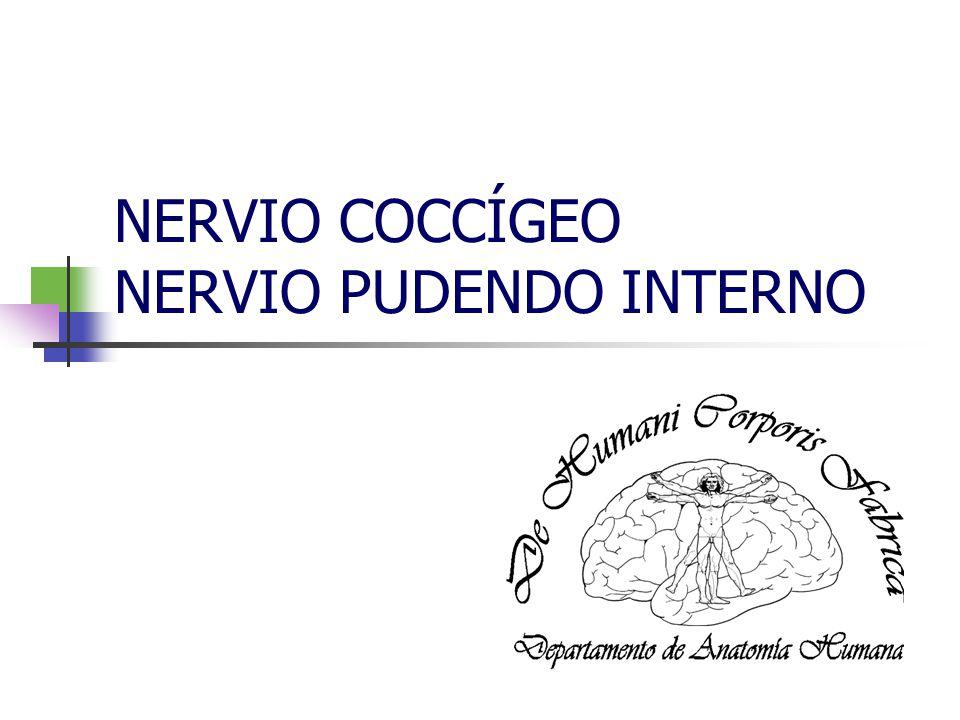 NERVIO COCCÍGEO NERVIO PUDENDO INTERNO