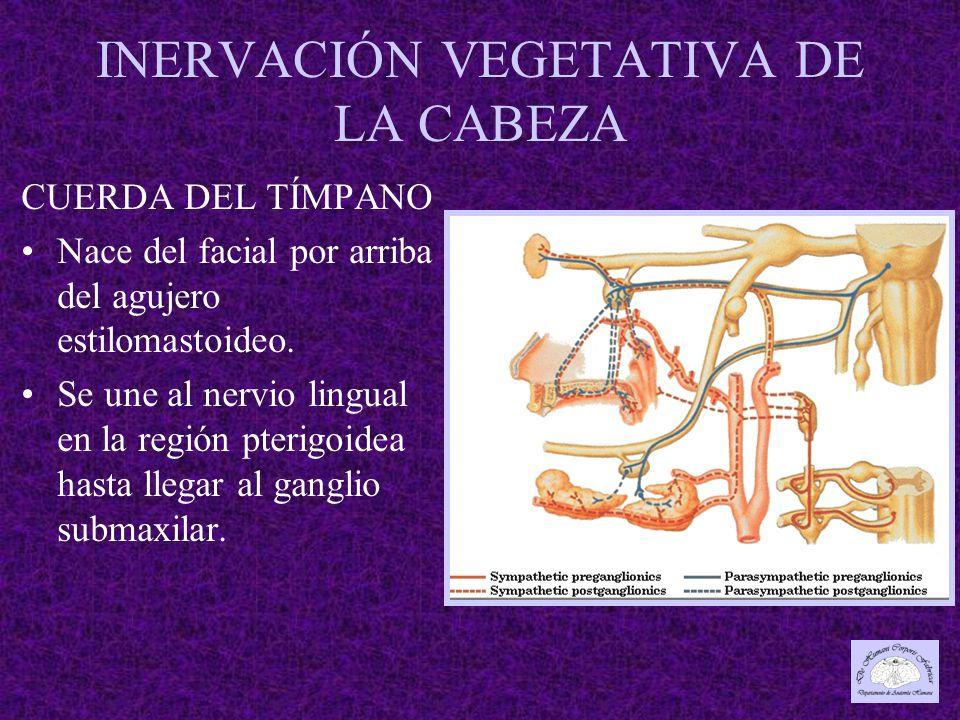 INERVACIÓN VEGETATIVA DE LA CABEZA