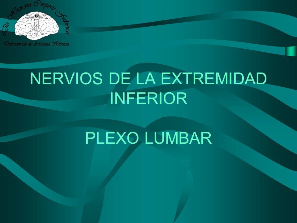 NERVIOS DE LA EXTREMIDAD INFERIOR PLEXO LUMBAR