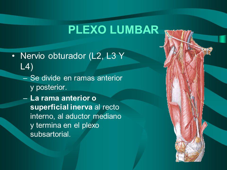 PLEXO LUMBAR Nervio obturador (L2, L3 Y L4)