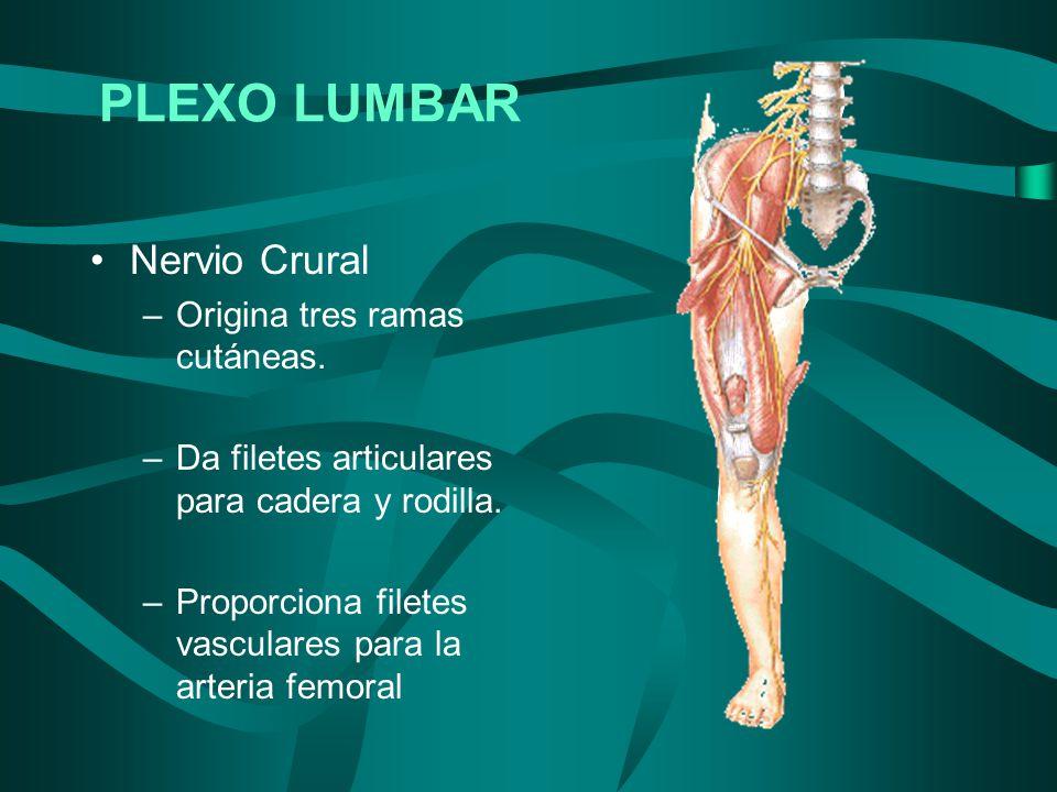 PLEXO LUMBAR Nervio Crural Origina tres ramas cutáneas.