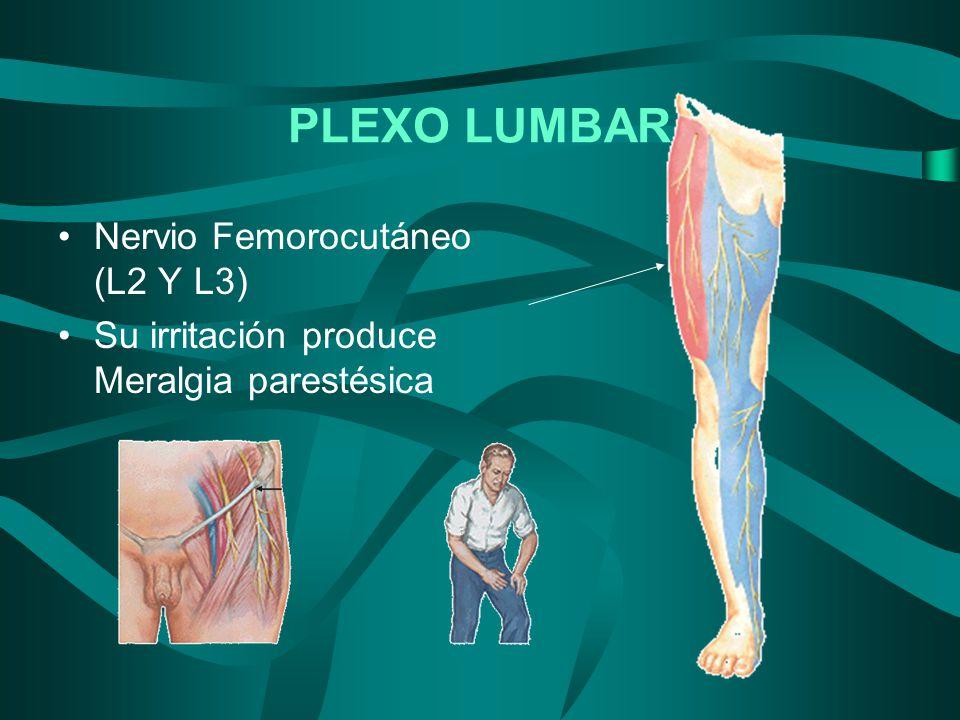 PLEXO LUMBAR Nervio Femorocutáneo (L2 Y L3)