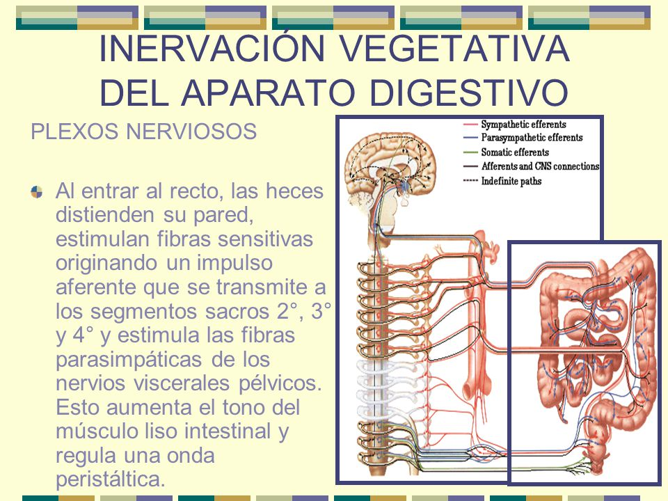 INERVACIÓN VEGETATIVA DEL APARATO DIGESTIVO