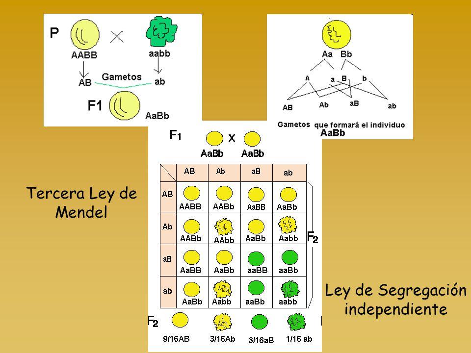 Ley de Segregación independiente