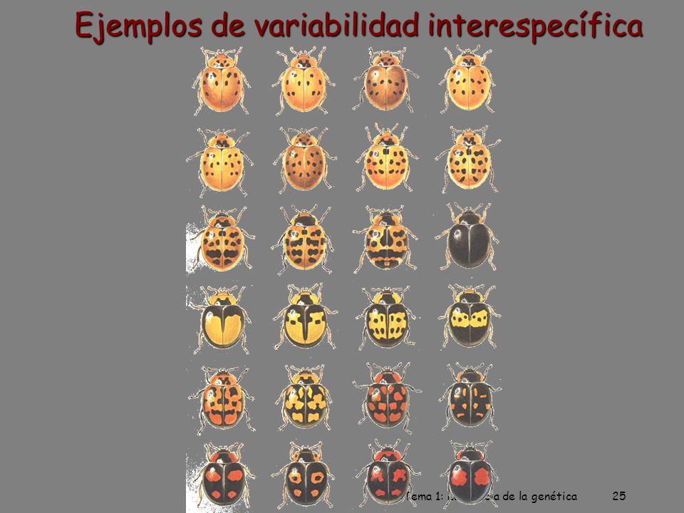 Ejemplos de variabilidad interespecífica