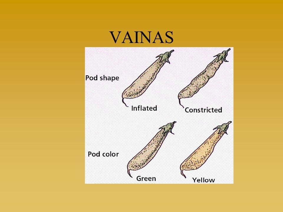 VAINAS