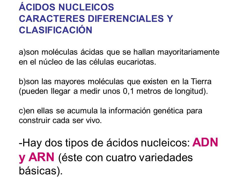 ÁCIDOS NUCLEICOS CARACTERES DIFERENCIALES Y CLASIFICACIÓN.
