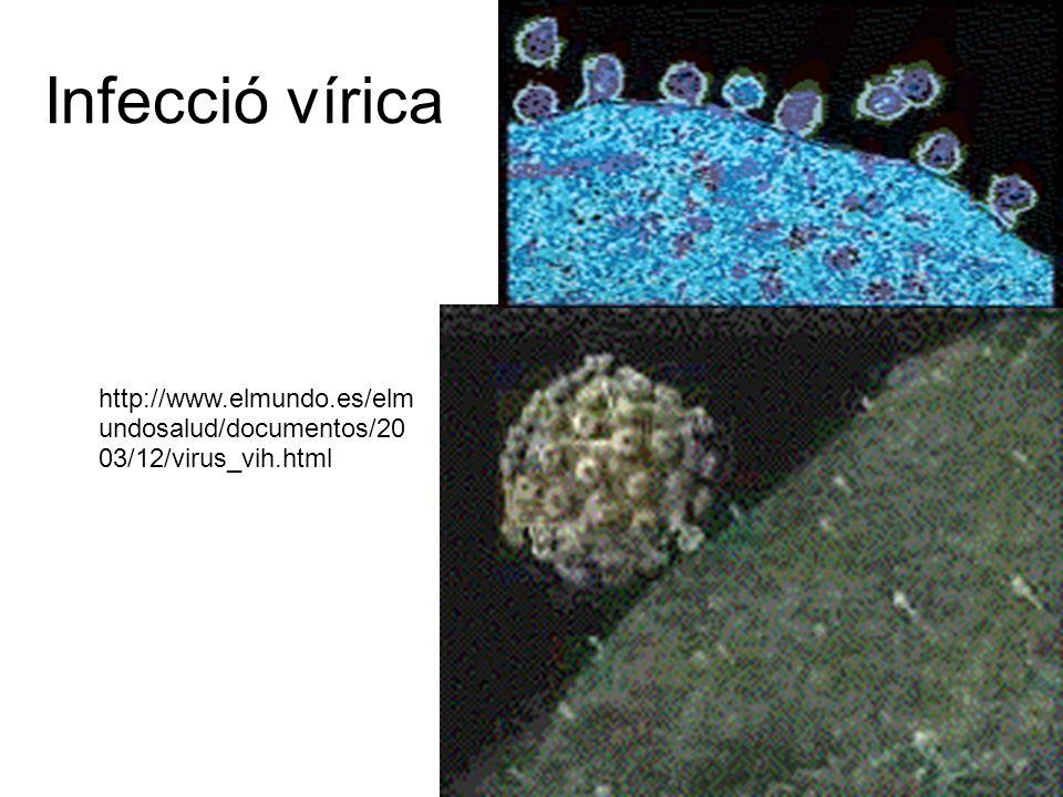 Infecció vírica http://www.elmundo.es/elmundosalud/documentos/2003/12/virus_vih.html