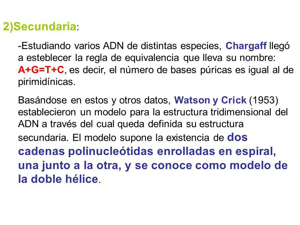 2)Secundaria: