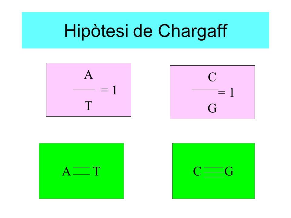 Hipòtesi de Chargaff A = 1 T C = 1 G A T C G