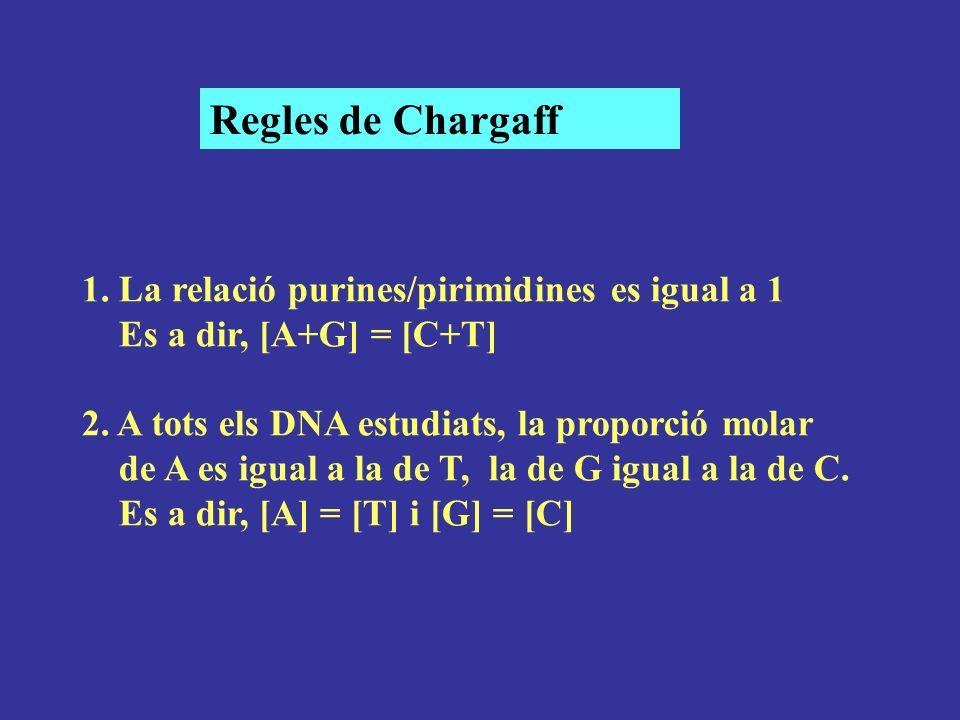 Regles de Chargaff 1. La relació purines/pirimidines es igual a 1
