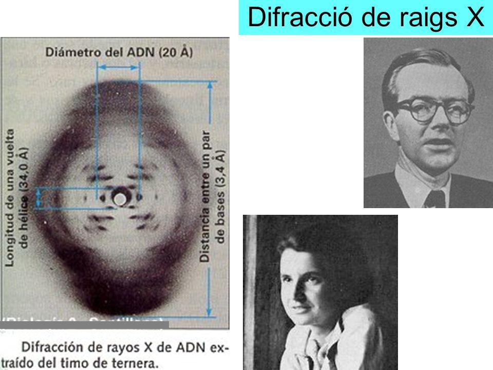 Difracció de raigs X