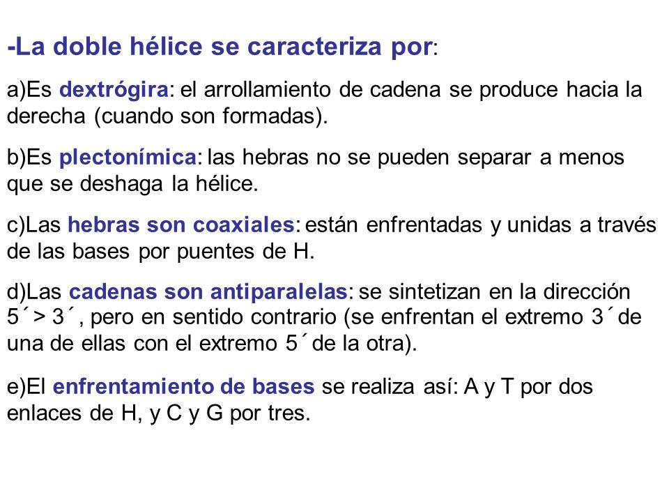 -La doble hélice se caracteriza por: