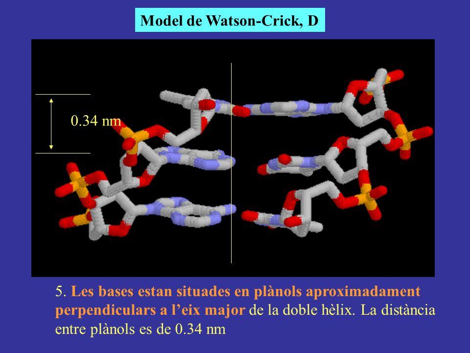 Model de Watson-Crick, D