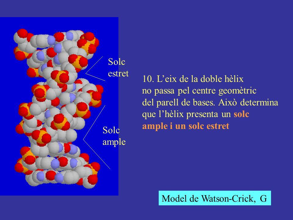 Solc estret. 10. L'eix de la doble hèlix. no passa pel centre geomètric. del parell de bases. Això determina.