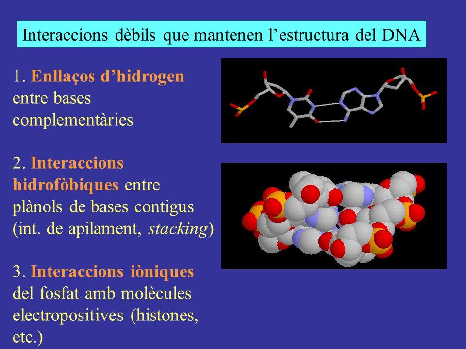 Interaccions dèbils que mantenen l'estructura del DNA