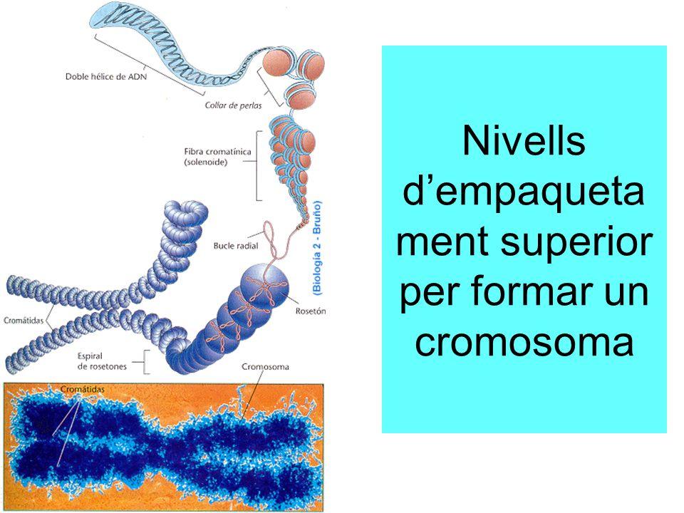 Nivells d'empaquetament superior per formar un cromosoma