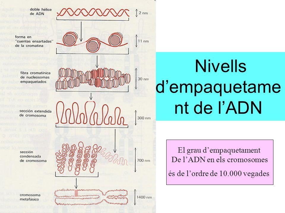 Nivells d'empaquetament de l'ADN