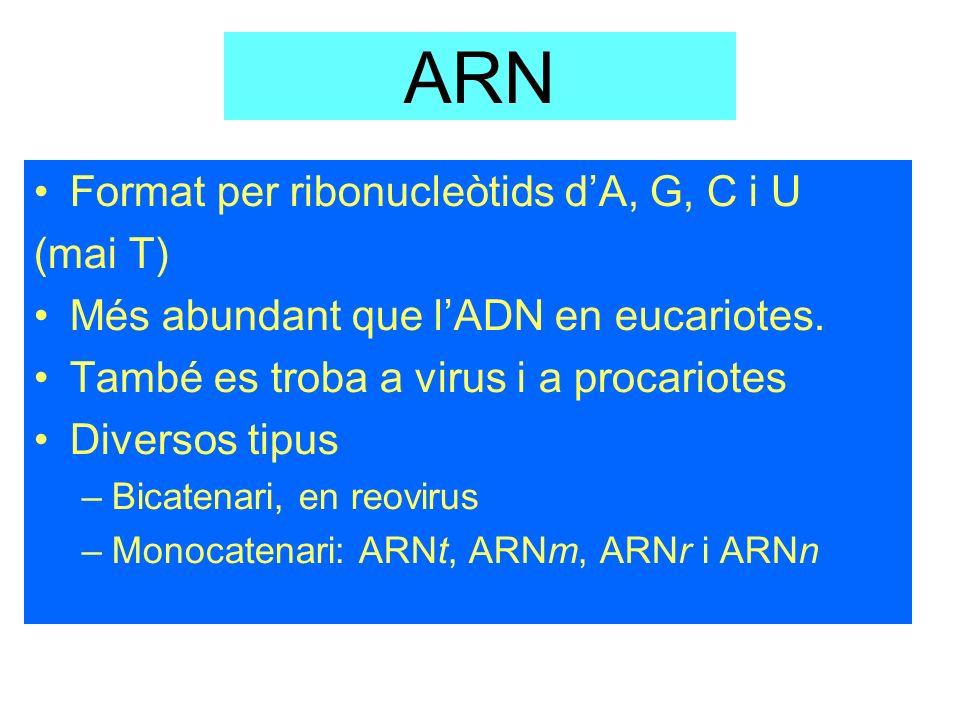 ARN Format per ribonucleòtids d'A, G, C i U (mai T)