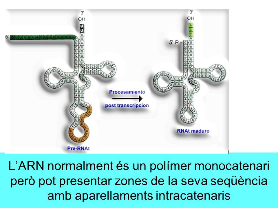 L'ARN normalment és un polímer monocatenari però pot presentar zones de la seva seqüència amb aparellaments intracatenaris