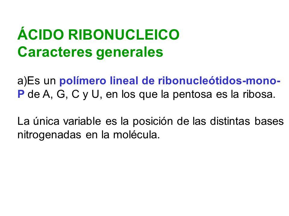 ÁCIDO RIBONUCLEICO Caracteres generales