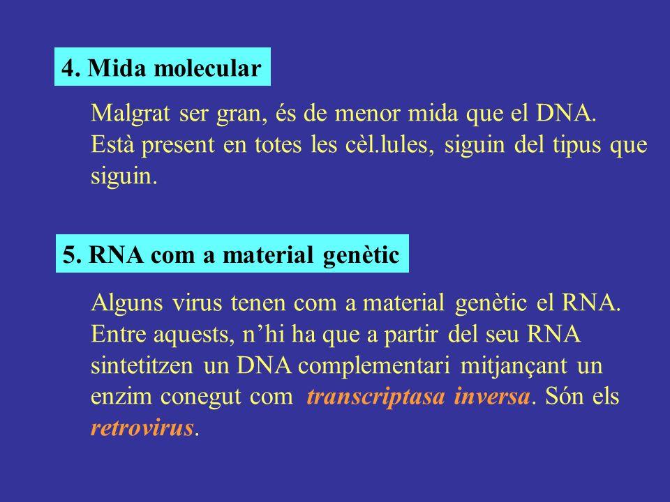 4. Mida molecular Malgrat ser gran, és de menor mida que el DNA. Està present en totes les cèl.lules, siguin del tipus que siguin.