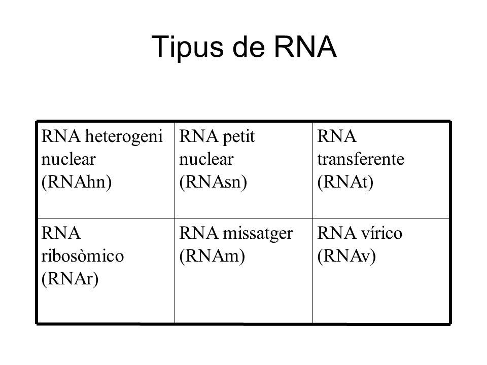 Tipus de RNA RNA vírico (RNAv) RNA missatger (RNAm)