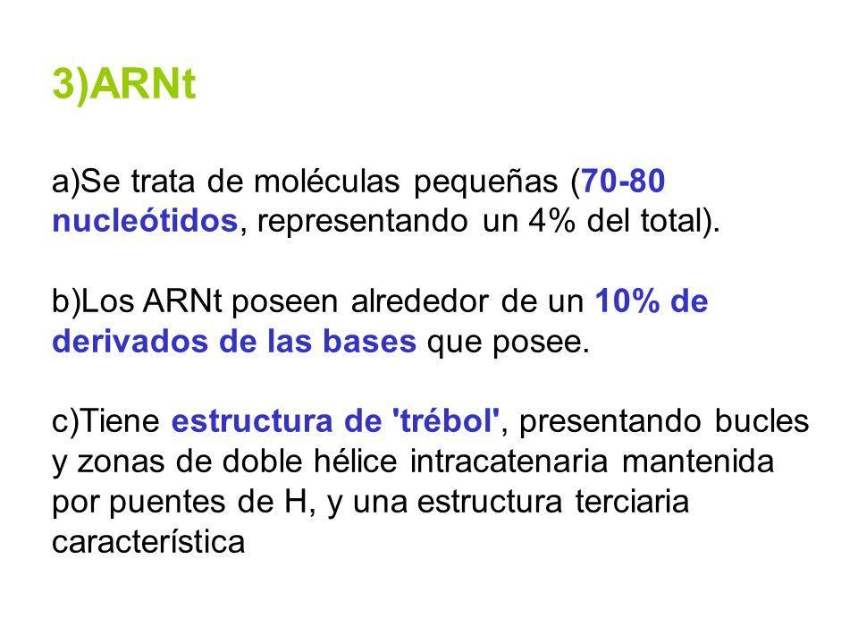 3)ARNt a)Se trata de moléculas pequeñas (70-80 nucleótidos, representando un 4% del total).