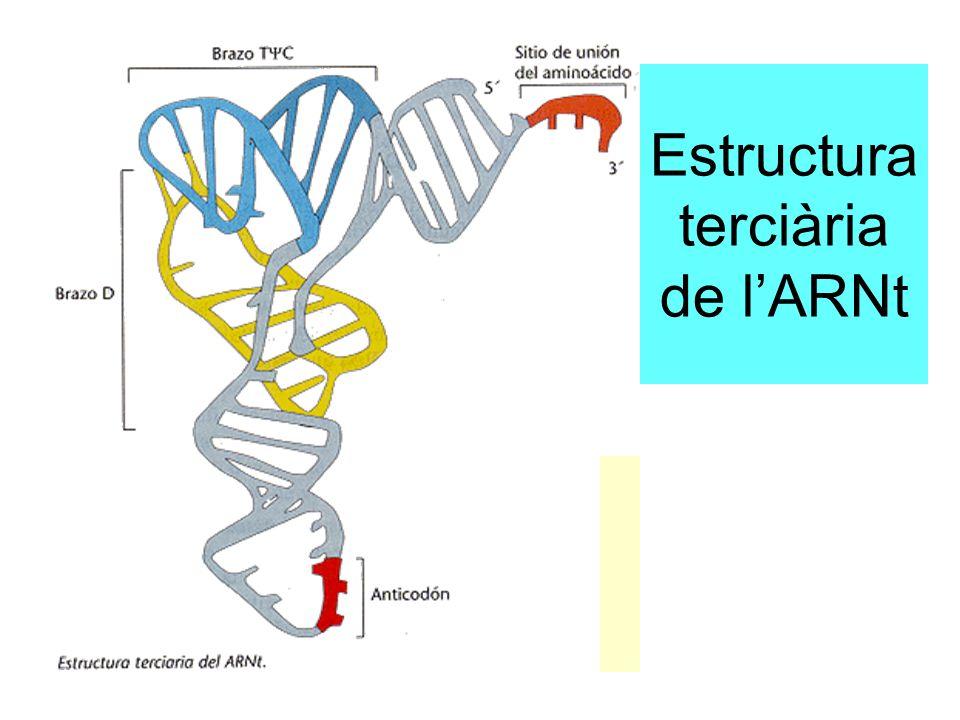 Estructura terciària de l'ARNt