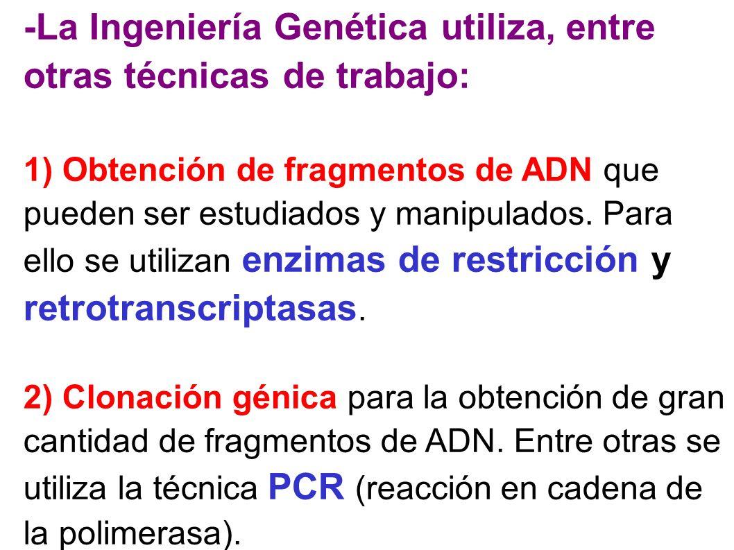 -La Ingeniería Genética utiliza, entre otras técnicas de trabajo: