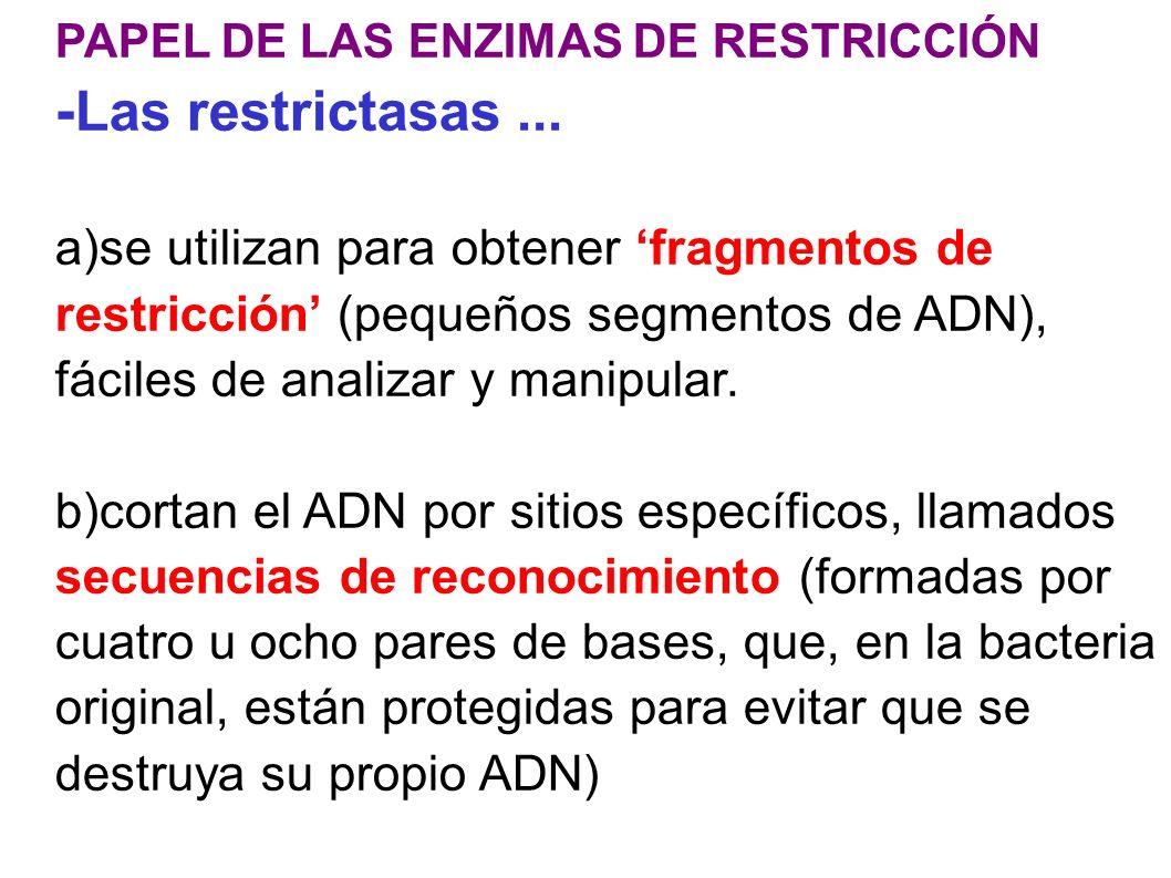 PAPEL DE LAS ENZIMAS DE RESTRICCIÓN