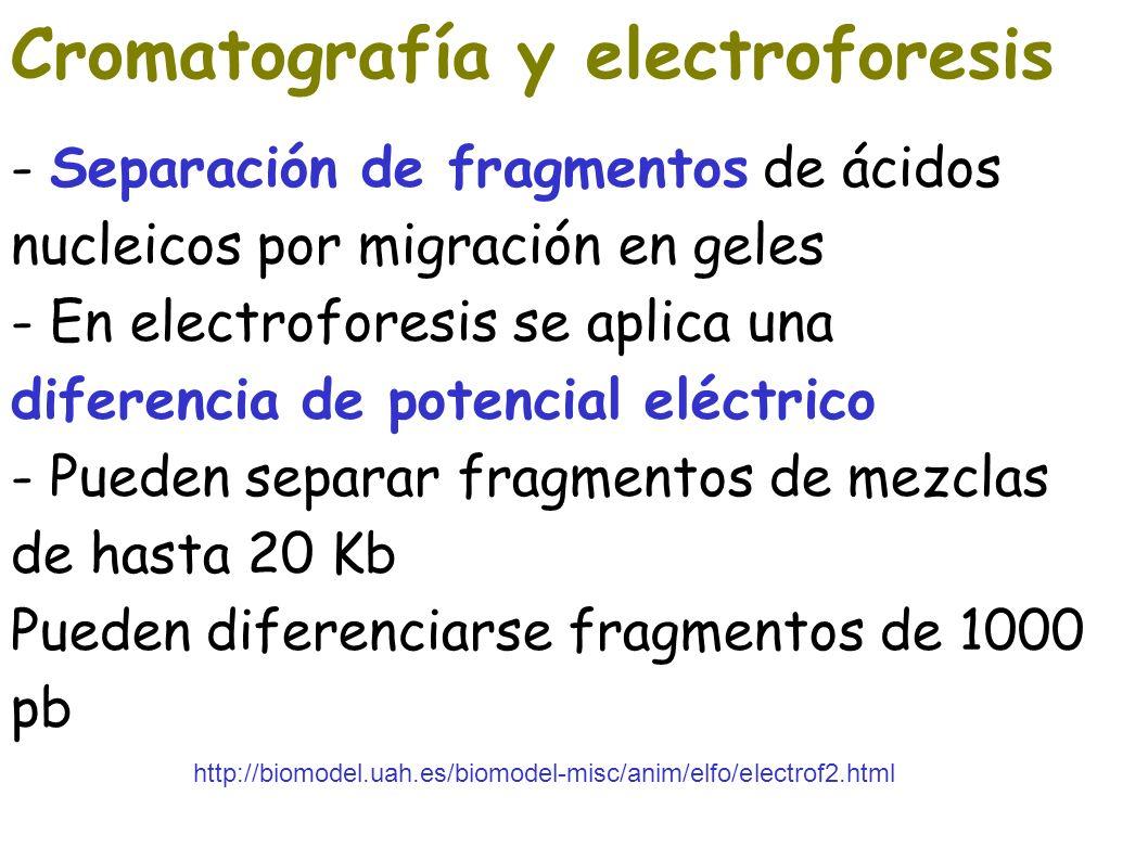 Cromatografía y electroforesis