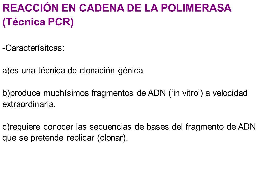 REACCIÓN EN CADENA DE LA POLIMERASA (Técnica PCR)