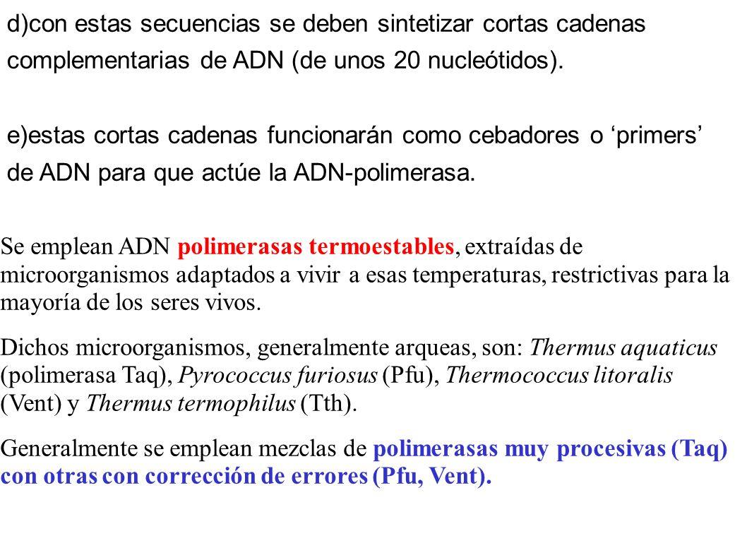d)con estas secuencias se deben sintetizar cortas cadenas complementarias de ADN (de unos 20 nucleótidos).