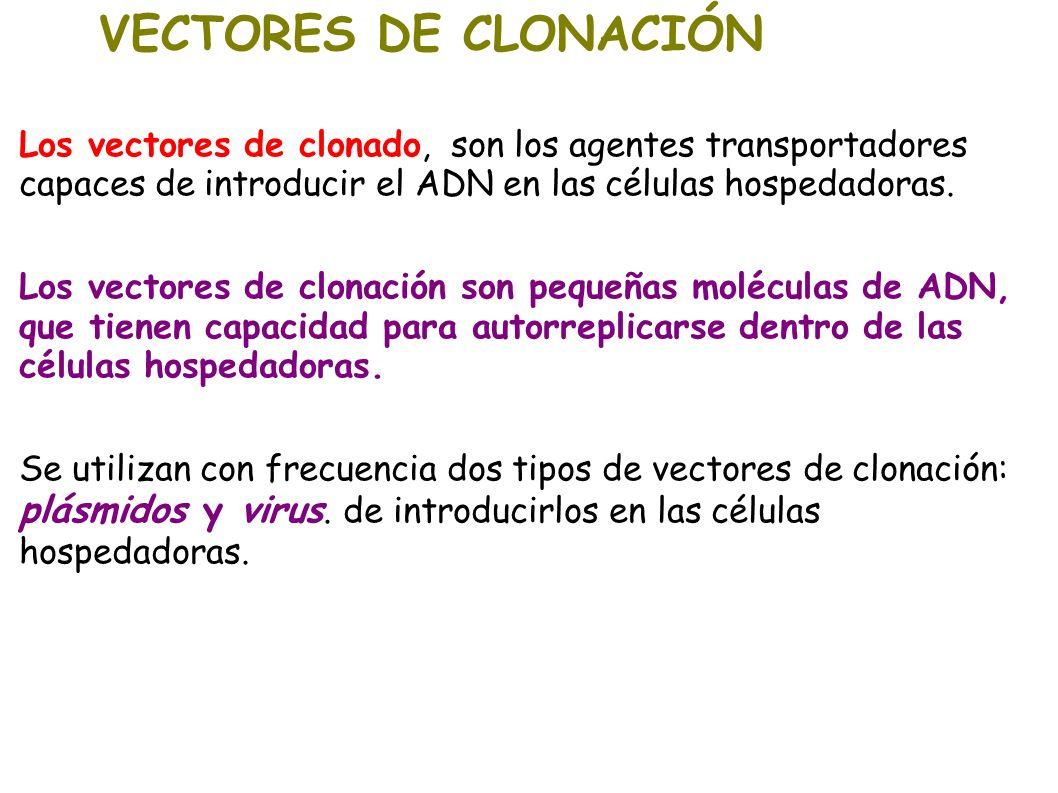 VECTORES DE CLONACIÓNLos vectores de clonado, son los agentes transportadores capaces de introducir el ADN en las células hospedadoras.