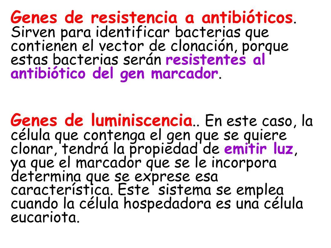Genes de resistencia a antibióticos