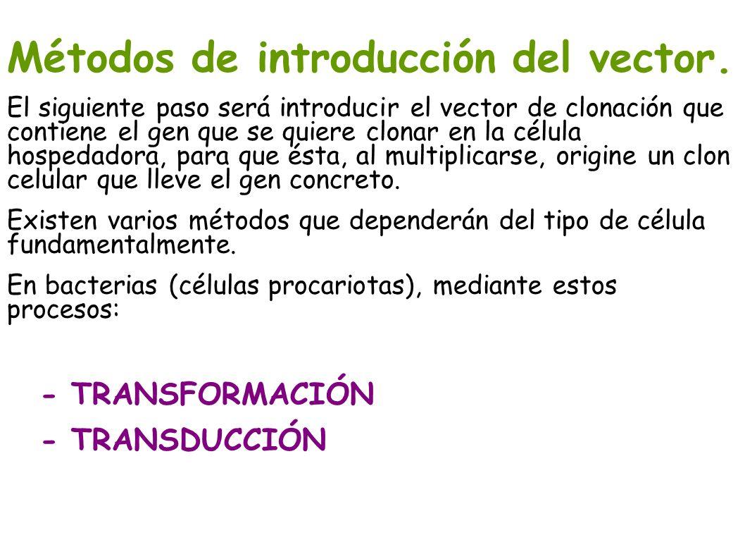 Métodos de introducción del vector.