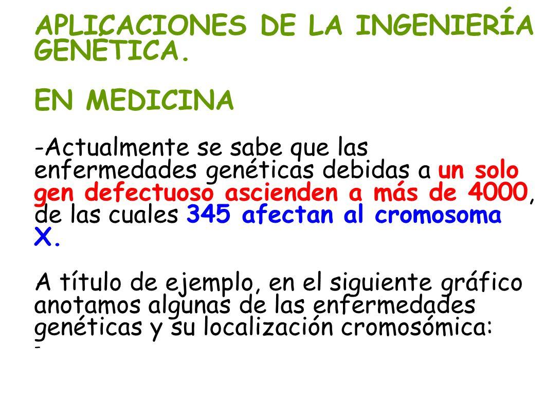 APLICACIONES DE LA INGENIERÍA GENÉTICA. EN MEDICINA