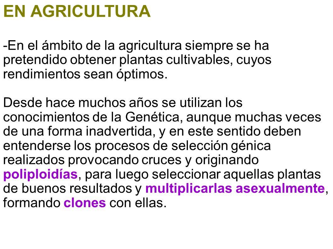 EN AGRICULTURA-En el ámbito de la agricultura siempre se ha pretendido obtener plantas cultivables, cuyos rendimientos sean óptimos.