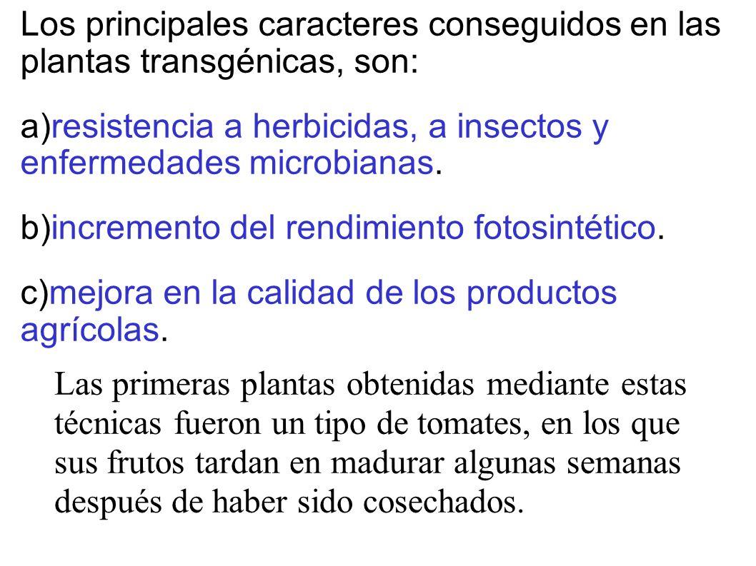 Los principales caracteres conseguidos en las plantas transgénicas, son: