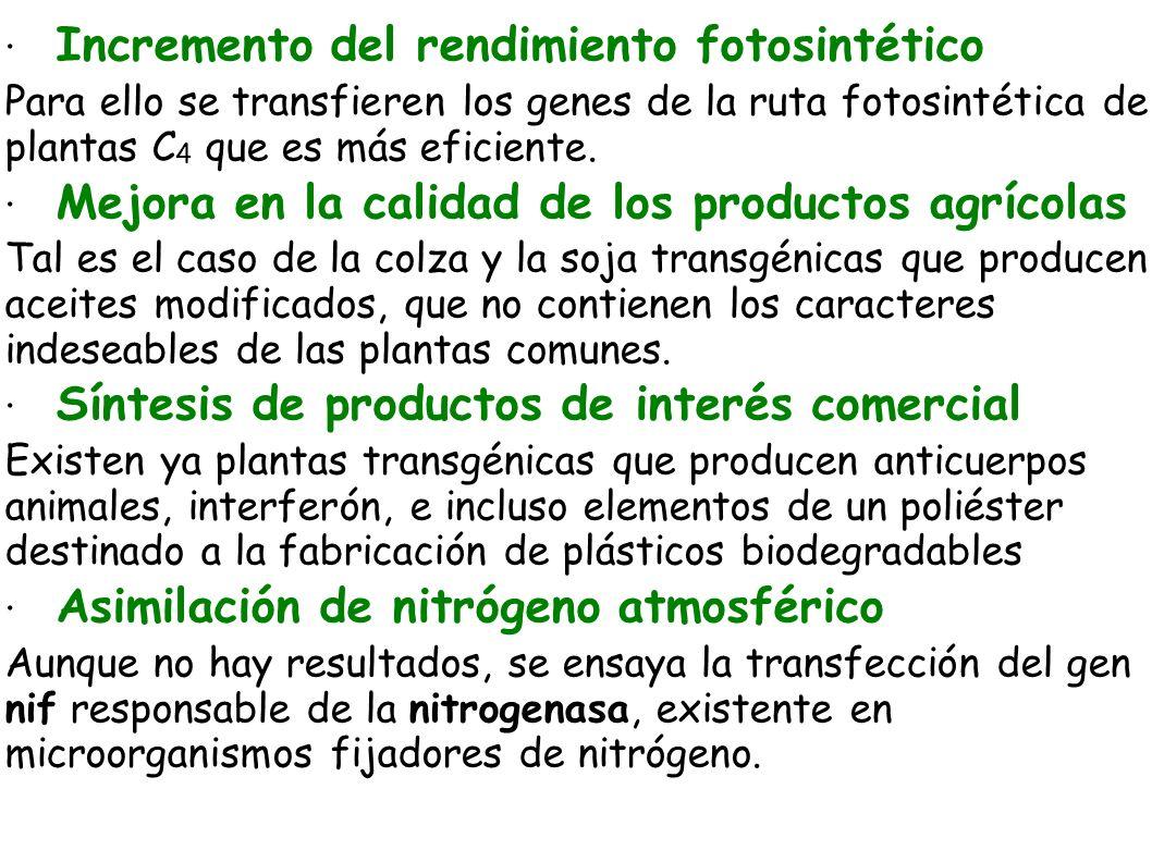 · Incremento del rendimiento fotosintético