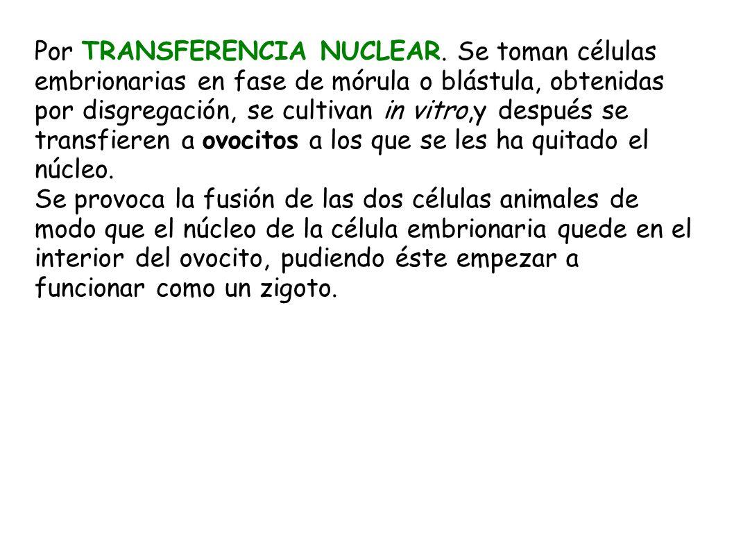 Por TRANSFERENCIA NUCLEAR
