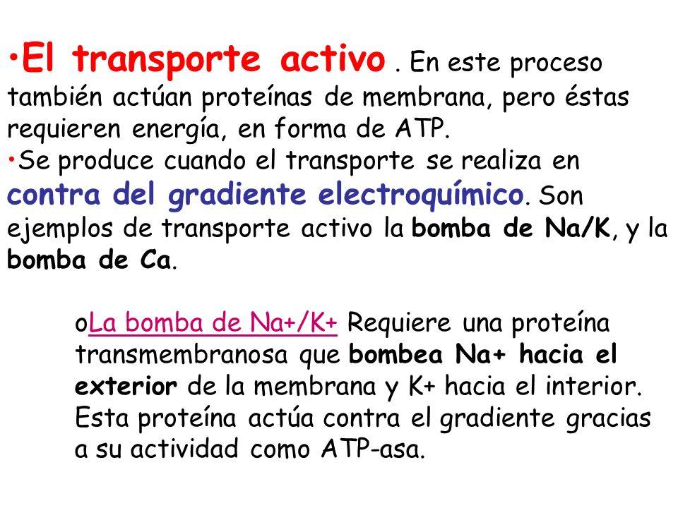 El transporte activo . En este proceso también actúan proteínas de membrana, pero éstas requieren energía, en forma de ATP.