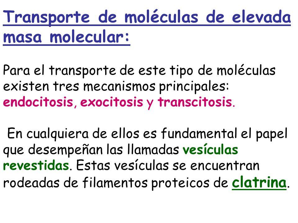 Transporte de moléculas de elevada masa molecular: