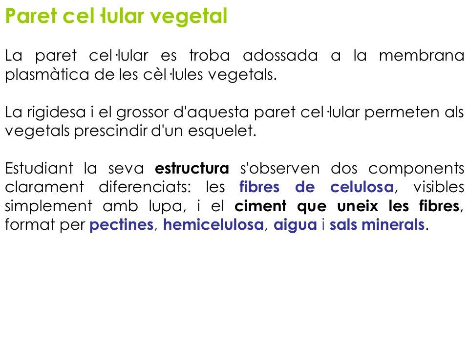 Paret cel·lular vegetal