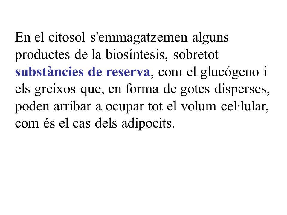 En el citosol s emmagatzemen alguns productes de la biosíntesis, sobretot substàncies de reserva, com el glucógeno i els greixos que, en forma de gotes disperses, poden arribar a ocupar tot el volum cel·lular, com és el cas dels adipocits.
