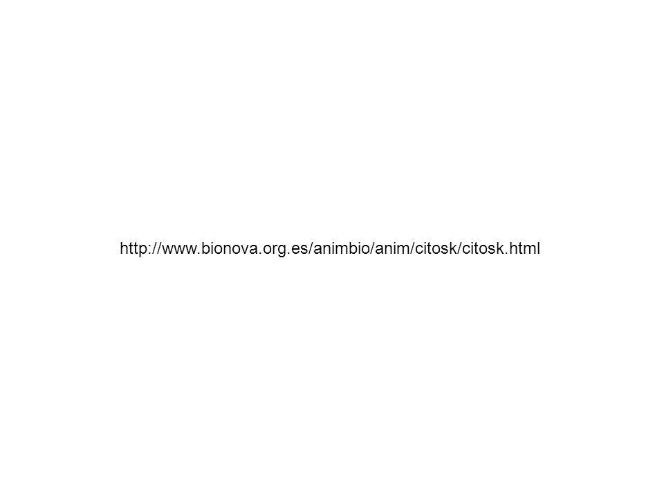 http://www.bionova.org.es/animbio/anim/citosk/citosk.html
